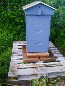 Bee chalet