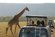 Safaris are ideal for honeymoon