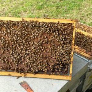 la nostra storia - camid apicoltura api