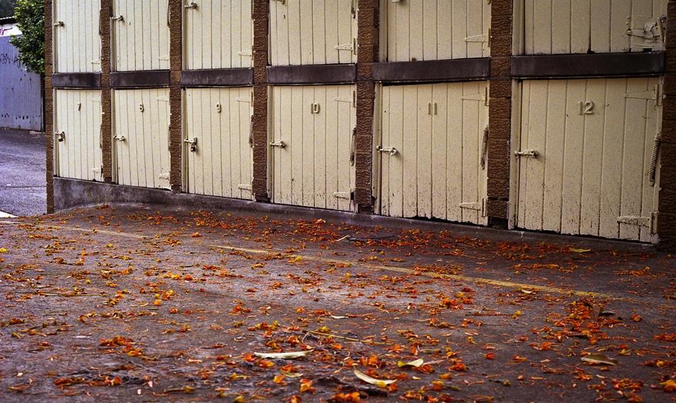 Leaves, Ashfield, Sydney, Australia