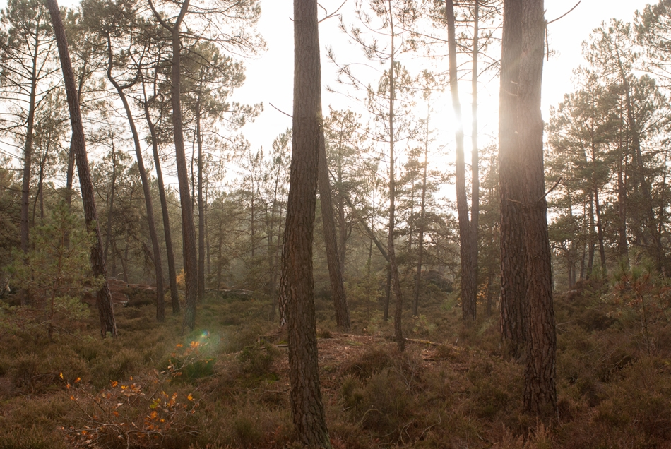 The woods of Fontainebleau, France