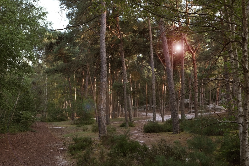Larchant the Forest