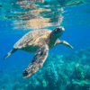Saving Sea Turtles by Khadijah Rahim
