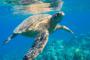 Saving Sea Turtles by Khadijah Rahim
