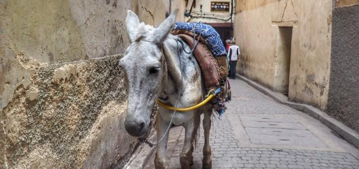Que ver en Fez