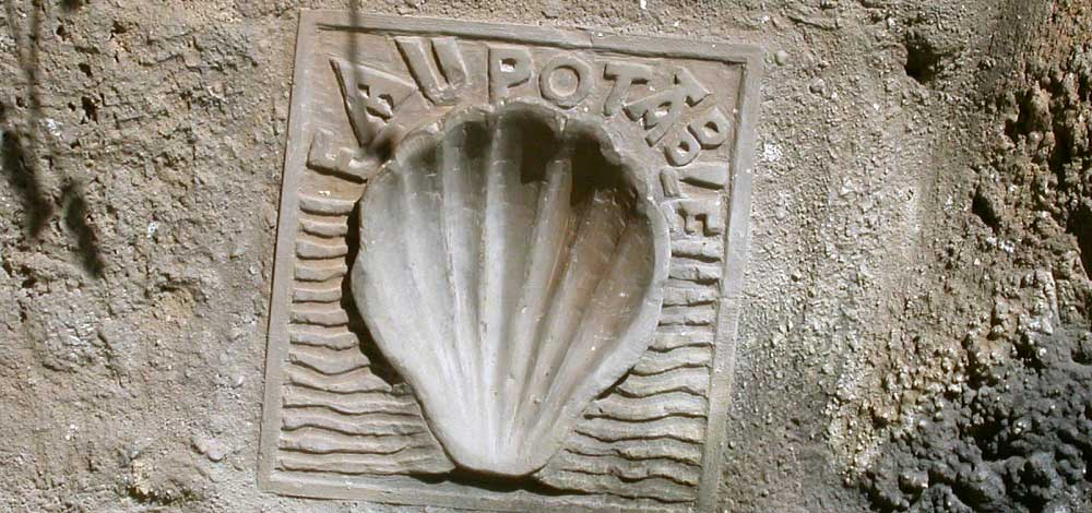 Scallop Shell Design on Wall