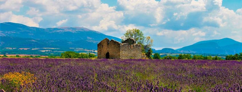 Campos de Lavanda en la Provenza Francesa
