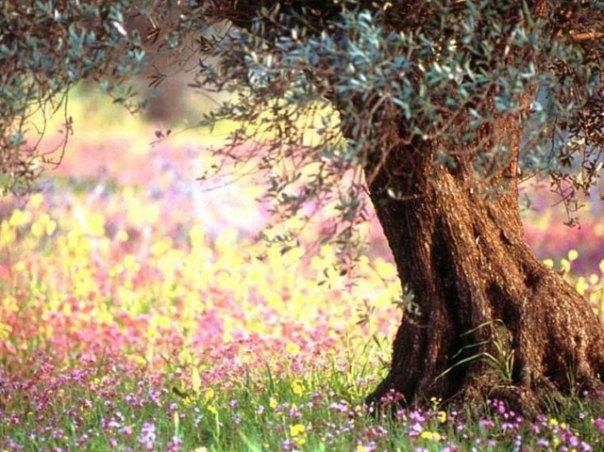 Árbol Flores