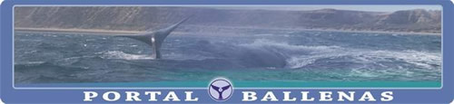 Portal Ballenas