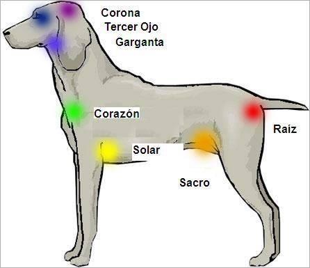 Reiki en animales | biobioqueyonohesido\'s Blog