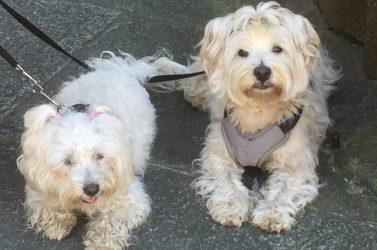 Et par søde hunde ved kirken i Tui, der desværre var lukket