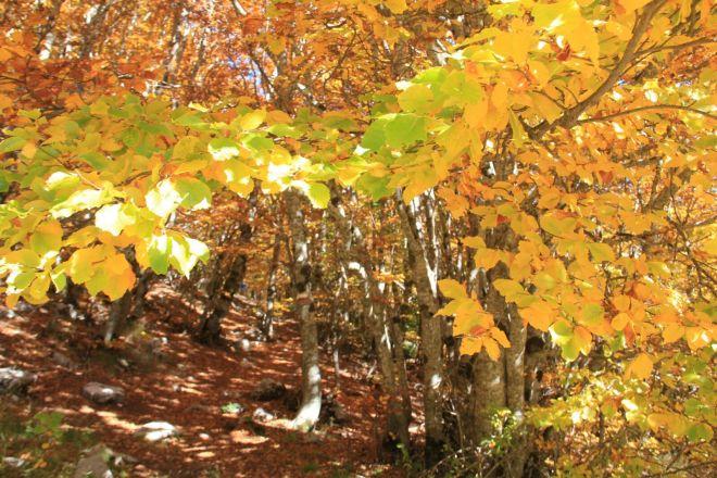 perch cadono le foglie camminare in abruzzo