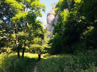 Verso il bosco delle Fate