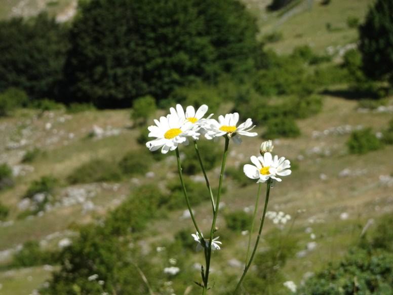 ACER monte Ocre 7-2018 monte Ocre 0006
