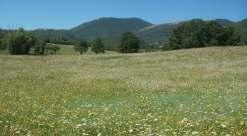 Panorama Monteleonese....l'Arcadia d'Italia!