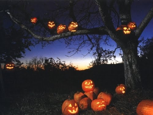 Pumpkin Tree, Sleepy Hollow, New York