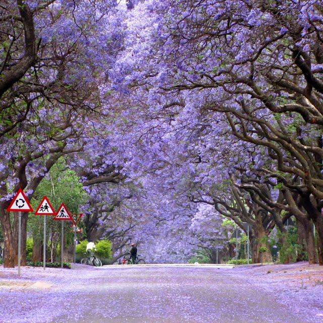 Marais Street, Pretoria, South Africa