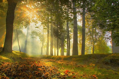 Sunrise Forest, Modena, Italy
