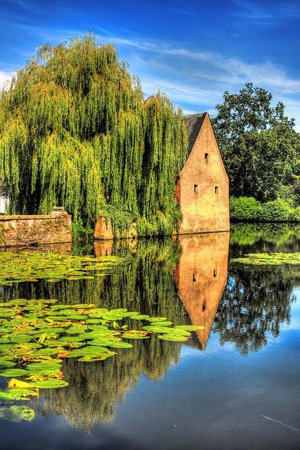 Weeping Willow Pond, Bruges, Belgium