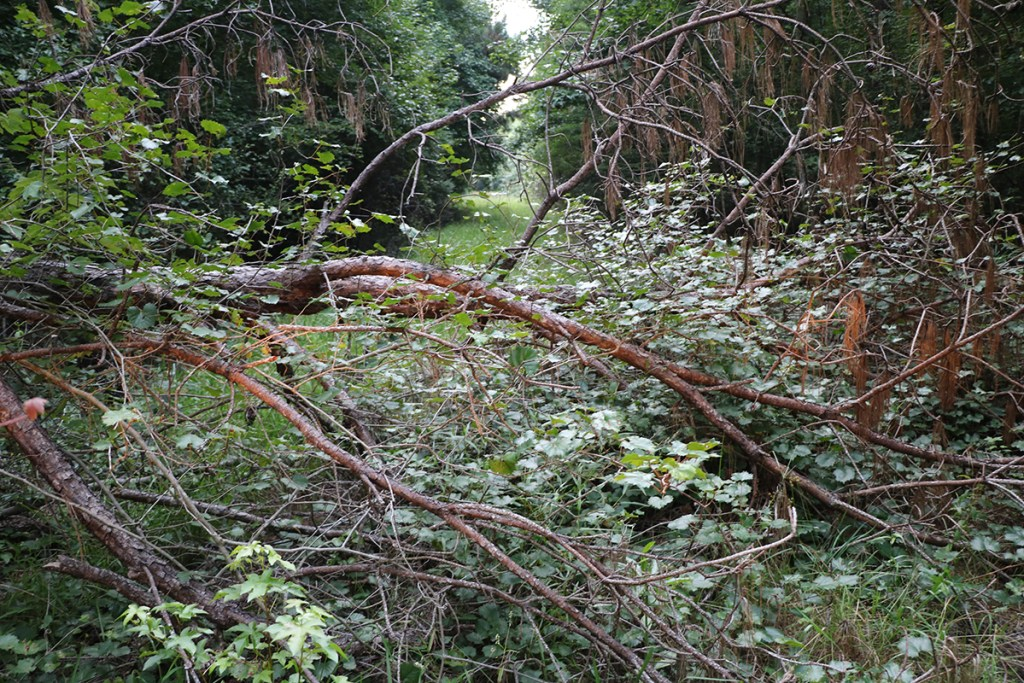 downed trees on hunting land from storms