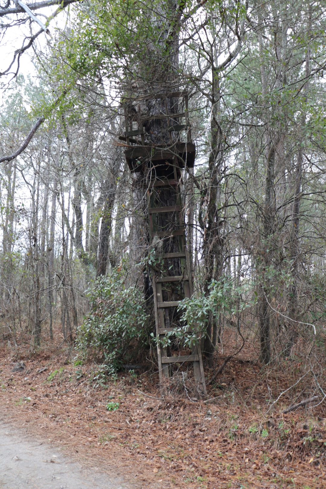 old weathered deer stand