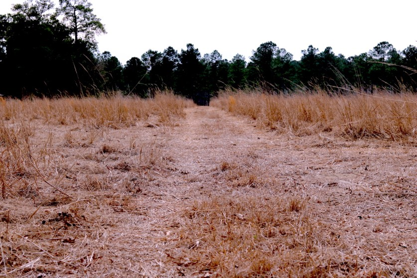 what does the landscape look like for quail hunting