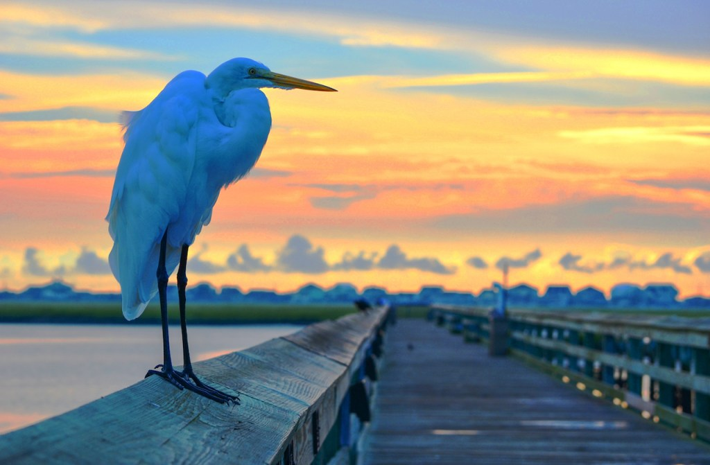 where can you get great nature photos in murrells inlet?