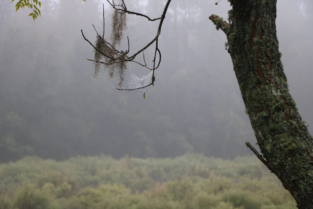 It can be very spooky to hunt during a foggy day.