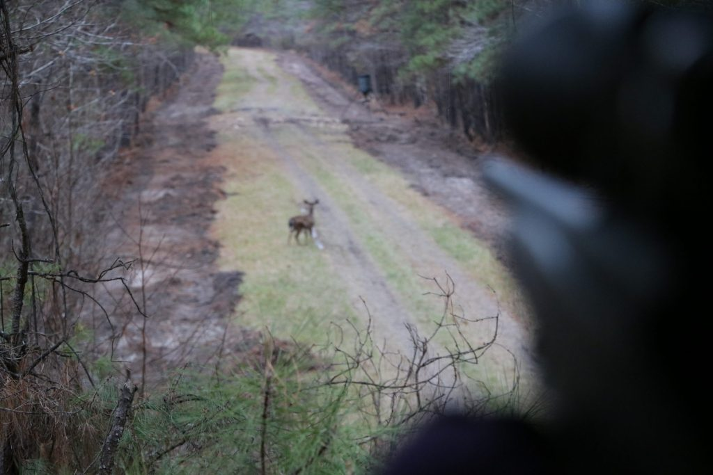 view of a deer from a deer stand