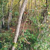 Secret Language of the Woods