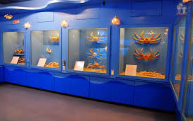 螃蟹博物館