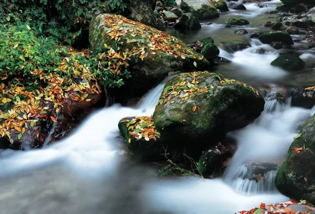 While the rocks gently break the flow of water, the green moss and foliage add a lot of colour to the frame. Exposure: 15sec at f/16 (ISO 100). Photograph/Rahul Sud