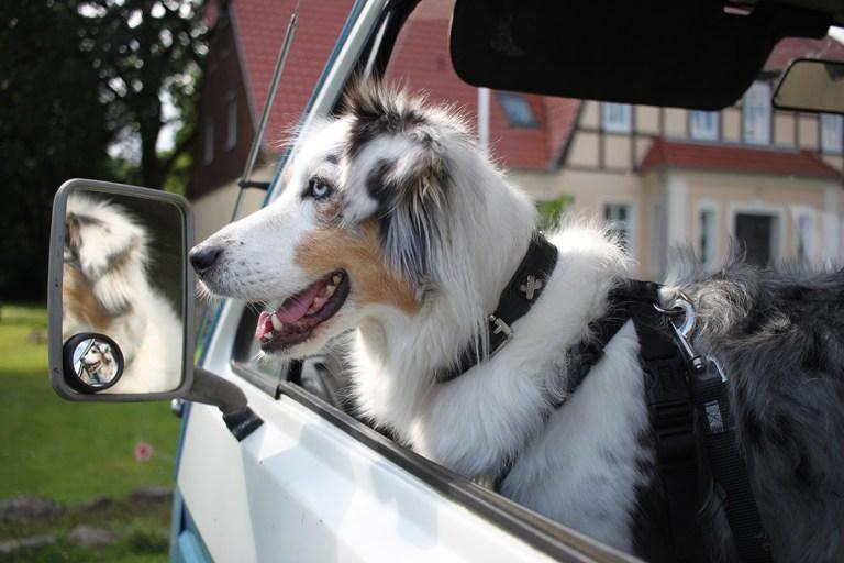 Mit dem Haustier auf Reisen: Was ihr beachten solltet.