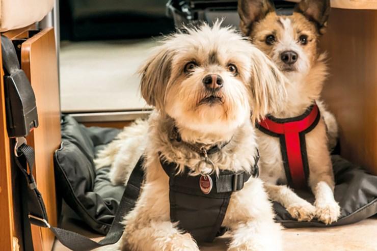 Mit dem Haustier auf Reisen - dabei sollte auch der vierbeinige Freund während der Fahrt ausreichend gesichert sein.