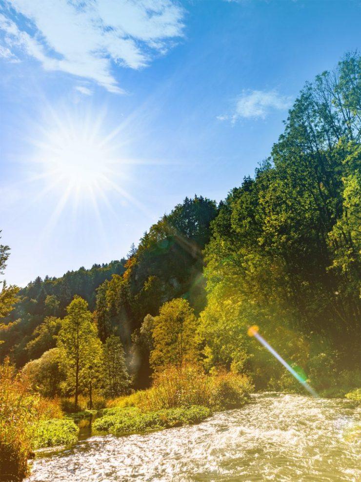 Waldstück im Oberpfälzer Wald