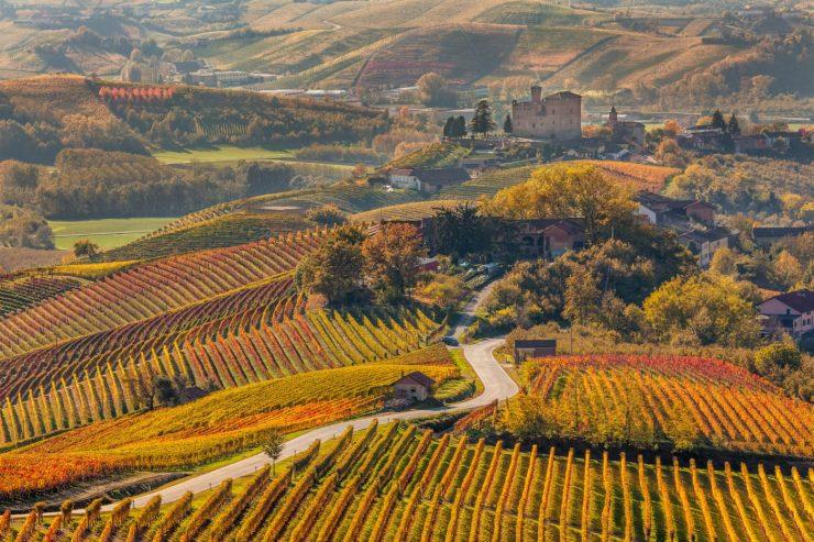 Weinberge in herbstlicher Färbung in Italien.