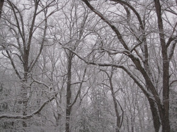 The trees covered in snow.