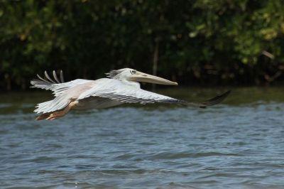pelican-3-1080p