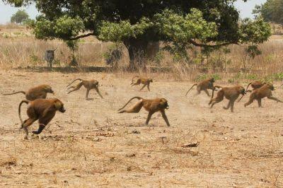 singes-dans-le-parc-du-campement-diu-niombato-12-1080p