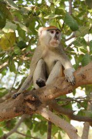singes-dans-le-parc-du-campement-diu-niombato-3-1080p