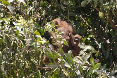 singes-dans-le-parc-du-campement-diu-niombato-6-1080p