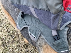 Outdoor Adventure Dog Pack