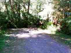 Bogachiel-State-Park-Campground-14