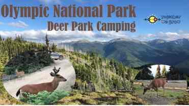 Deer Park Camping -1