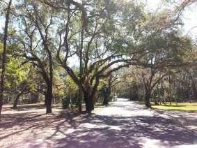 Highlands Hammock State Park in Sebring Florida7