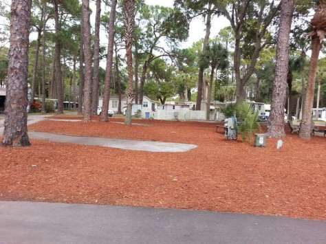Oak Springs Travel Park in Port Richey Florida1