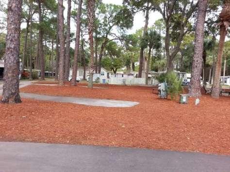 Oak Springs Travel Park in Port Richey Florida1