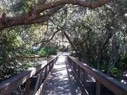 Oscar Scherer State Park in Osprey Florida3