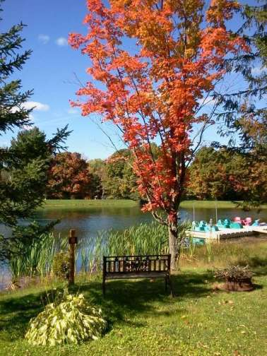 Cooperstown Shadow Brook Campground in Cooperstown New York Pond Tree