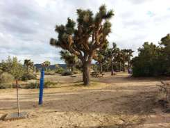 blackrock-campground-joshua-tree-national-park-5